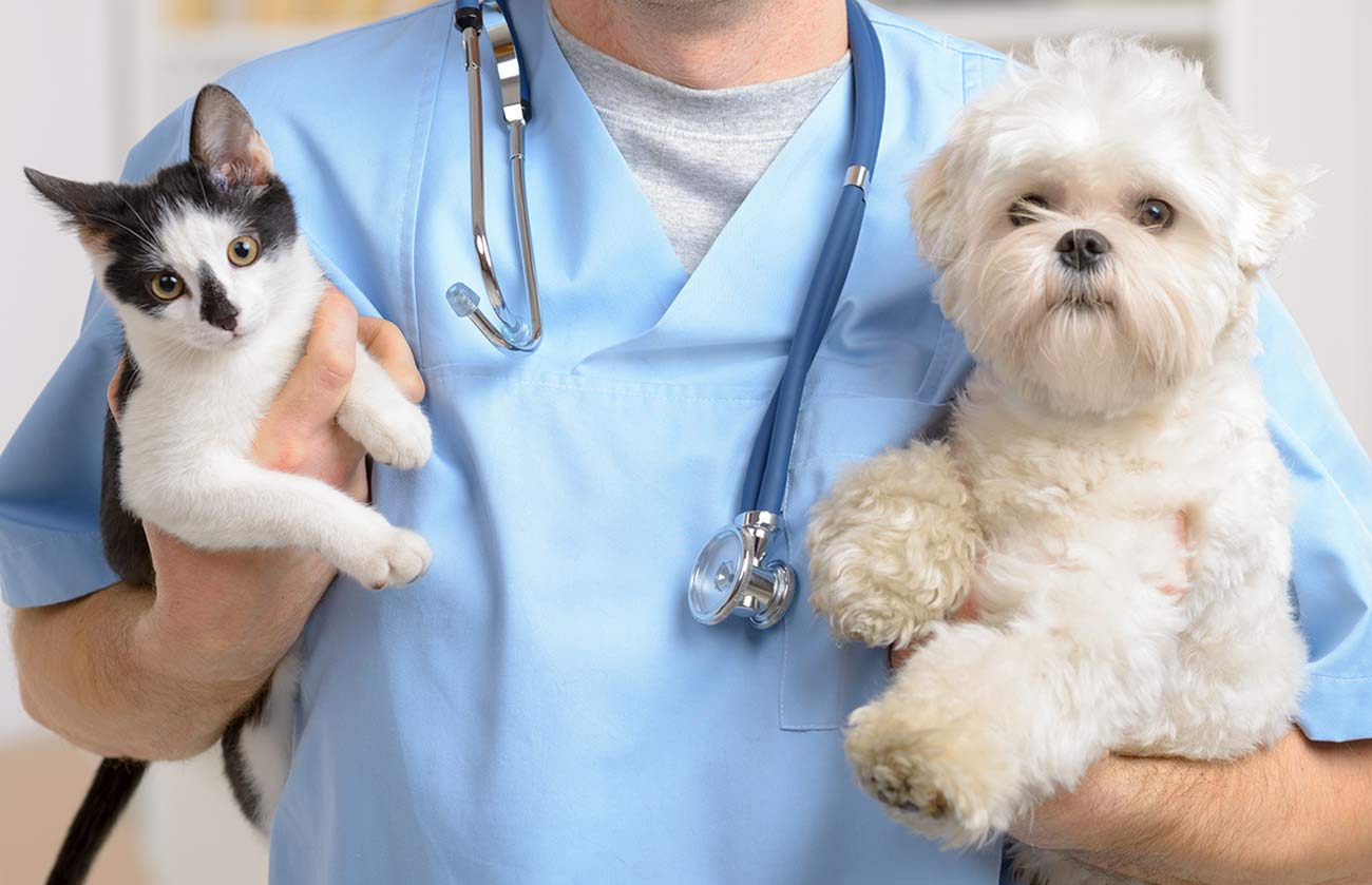 Humane Society of Atlantic County: Atlantic City, NJ: Adopt a Pet!